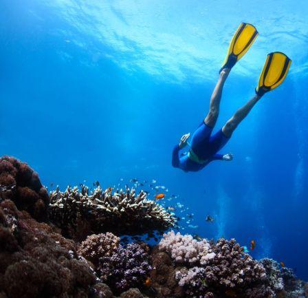 Free-diving image