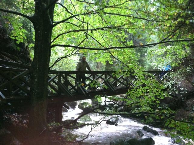 V Black Forest