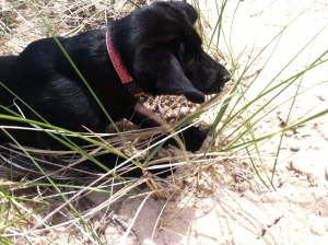 Digging in the dune (10 weeks)