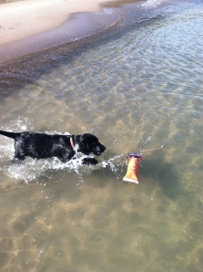 First water fetch (12 weeks)
