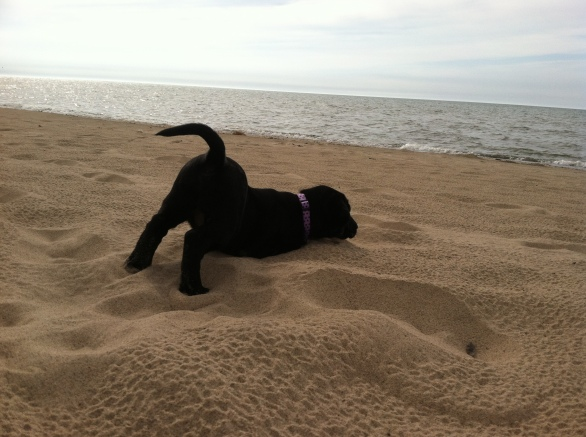 Gidget Goes to the beach (8 weeks)