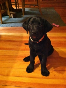 Pink puppy collar (9 weeks)